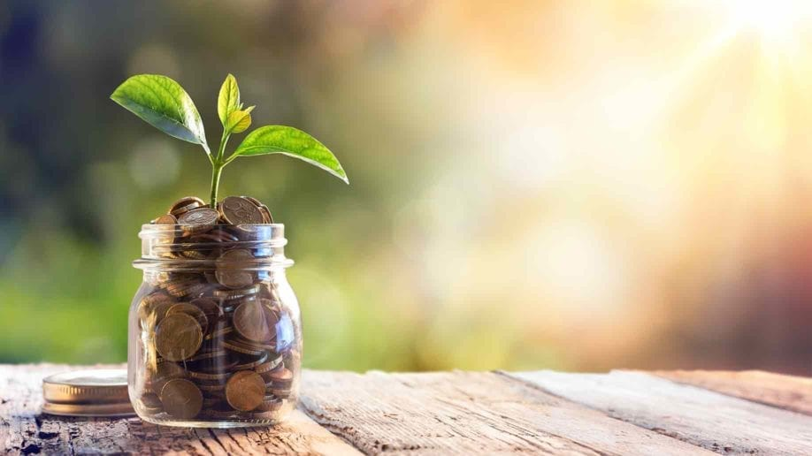 plant-growing-savings-coins-investment-interest-918x516